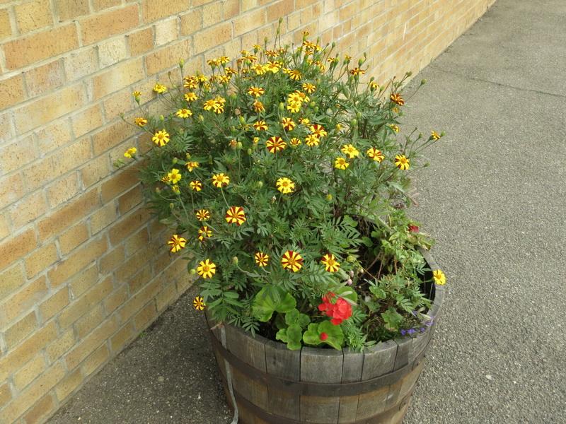 Plant tub on Meldreth Station