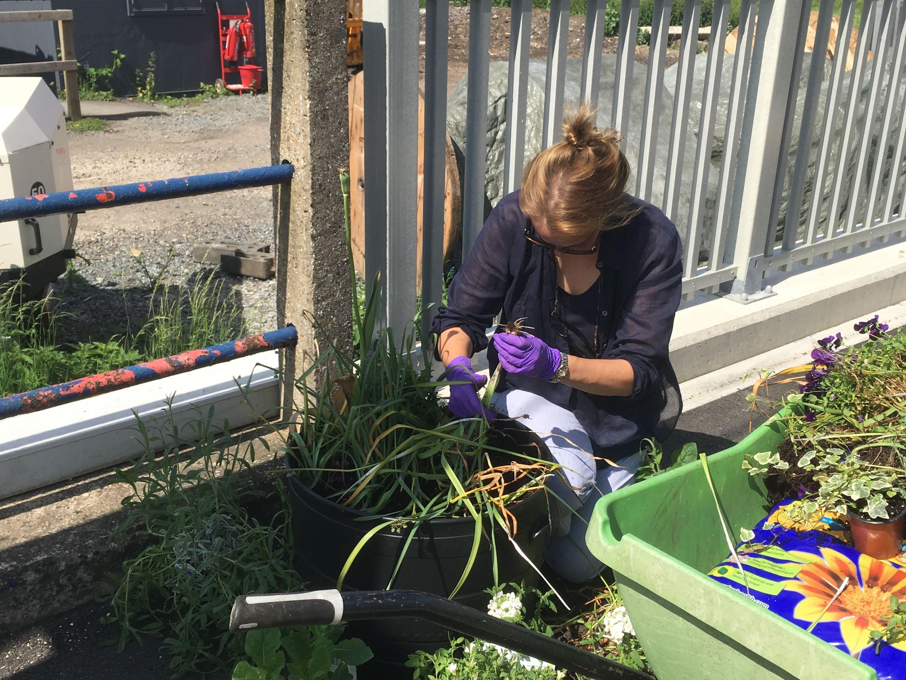 Planting the fragrant tub